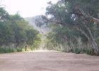 ... gesäumt von mächtigen Fluss-Eukalypten, den River Red Gums ...